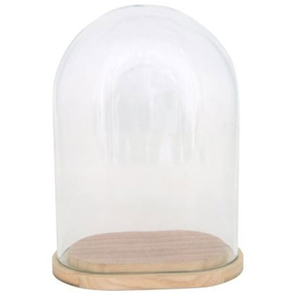 Glass Display Cover Dome Cloche oval wwooden base by  : 305 Glass Display Cover from www.ebay.co.uk size 600 x 600 jpeg 15kB