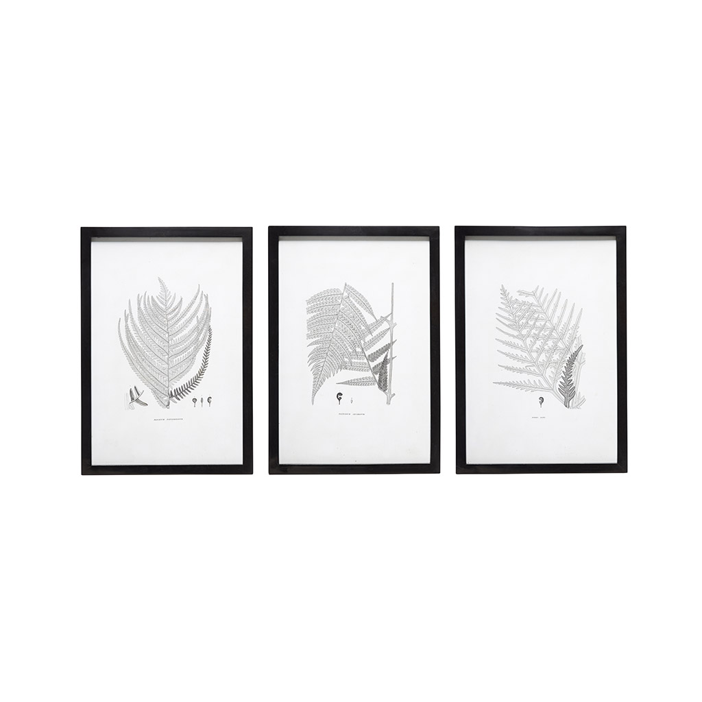 Set Of 3 Black U0026 White Wall ART Polypody Framed Print Poster Picture By  Hubsch