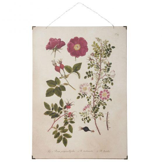 em_home-ib_laursen-roses-paper-poster-wall-home-decor-art-8251-00_1