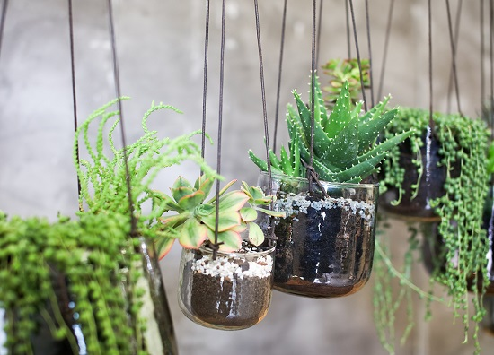 small-elegant-viri-hanging-planter-catching-finish-come-with-an-adjustable-dark-leather-tie-by-nkuku