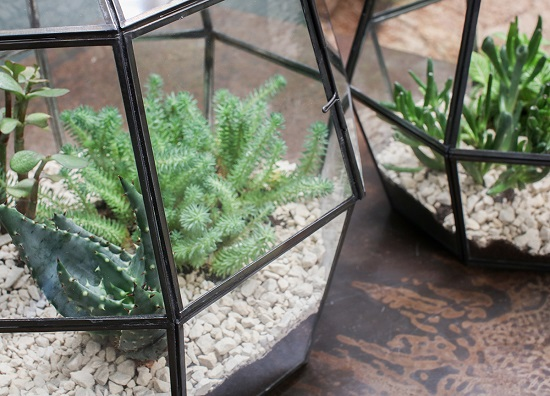 small-thika-terrarium-geometric-metal-framework-nkuku