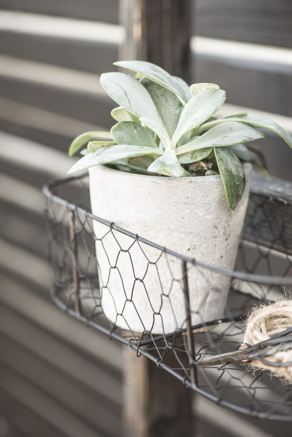 Small Metal Wire Hanging Basket / Pot Holder Garden Planter by Ib ...