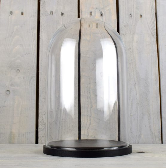 medium-glass-dome-display-cover-cloche-black-base-height-31cm