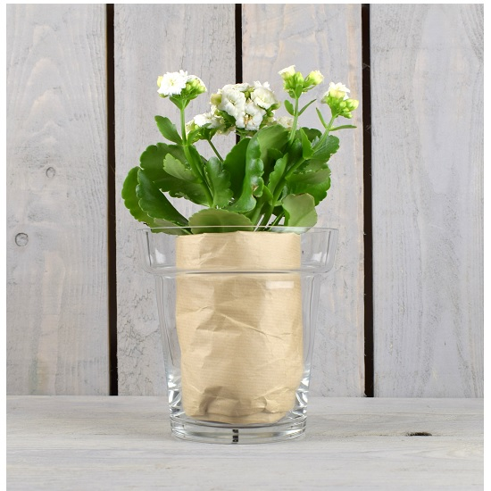 glass-clear-flower-pot-orchid-pot-plant-container-15-cm