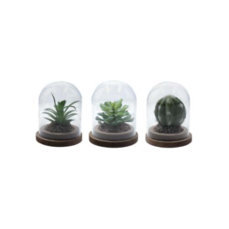 set-of-3-artificial-succulent-plant-with-glass-dome-by-gisela-graham